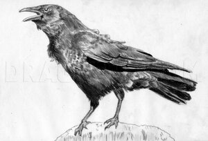 how-to-draw-a-realistic-crow-draw-crows-step-14_5e4ca57d3a0966.46220323_60368_3_3.jpg